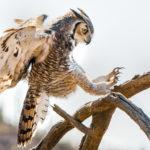 Опасные птицы для человека