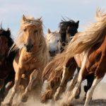 Интересные факты о лошадях (только самое интересное)