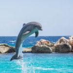 10 самых дружелюбных животных на планете