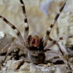 Топ:10 самых опасных насекомых мира